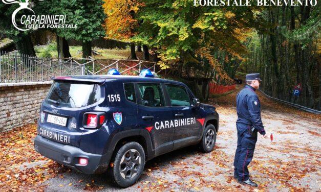 Arresto in flagranza per furto aggravato di piante in Cusano Mutri